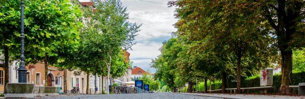 Straatbomen in acuut gevaar: 8 verenigingen stappen naar Grondwettelijk Hof